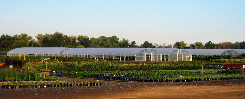 Western Tree Nursery Inc